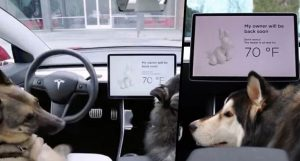 Tesla's Dog Mode Will Keep Your Pets Cool