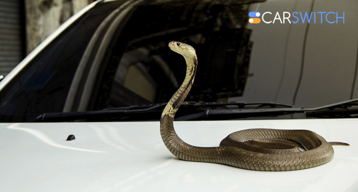 used car in Sharjah